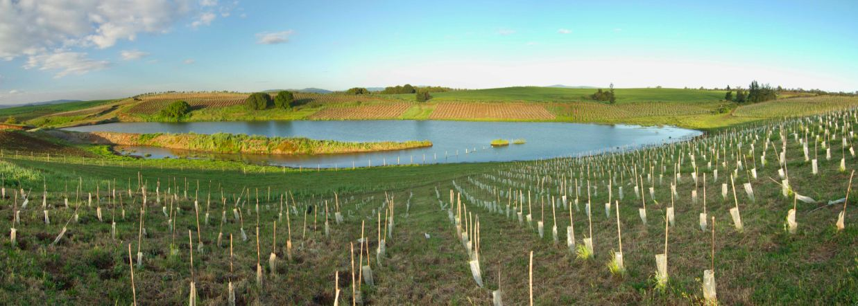 traiguen vineyard